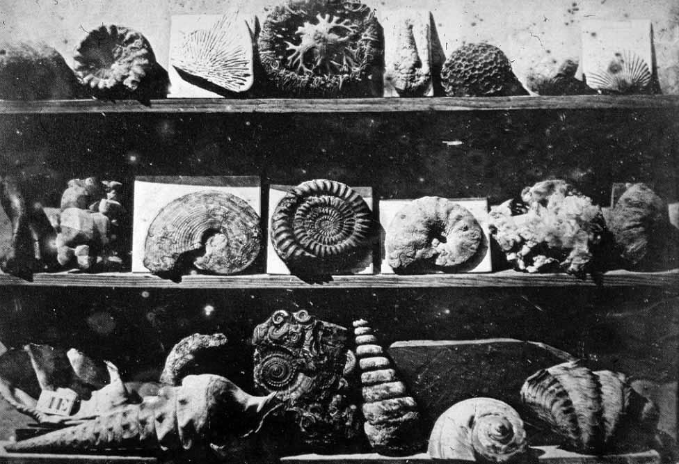 Daguerre_s Arrangement of shells, (