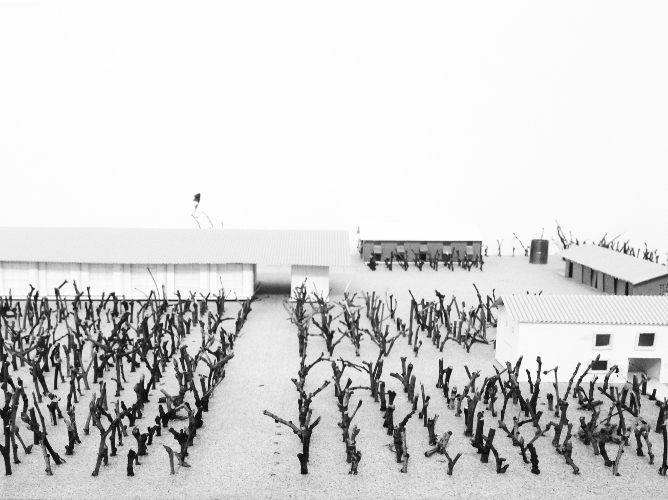 Orchard farm with cider factory,Sonia Dubois,student,4th year,University of Arts Poznan, bachelor of architecture_model_1